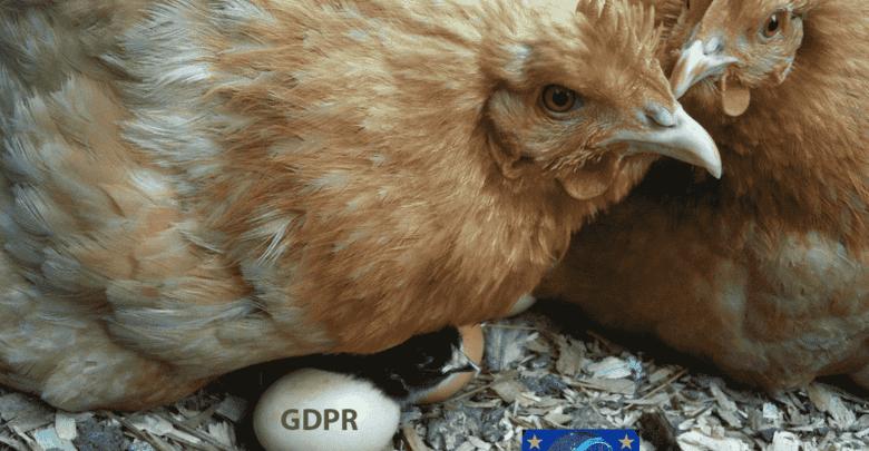 Könyvelőzóna - mint kotlós tyúk a tojásokat, úgy óvjuk a partnereink adatait a GDPR nélkül is